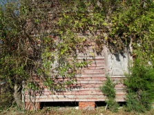 Up close, the brick foundation posts and the exterior wall are clearly visible under the vegetation.