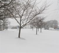 SNOWSCAPE, WINTER STORM JANUS