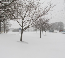 SNOWSCAPE, WINTER STORM JANUS