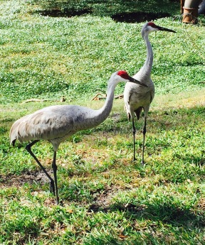 Cranes, I think. Right behind my apartment.