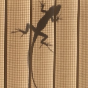 Tiny fellow, on the outside of a screen, as seen through vertical blinds..