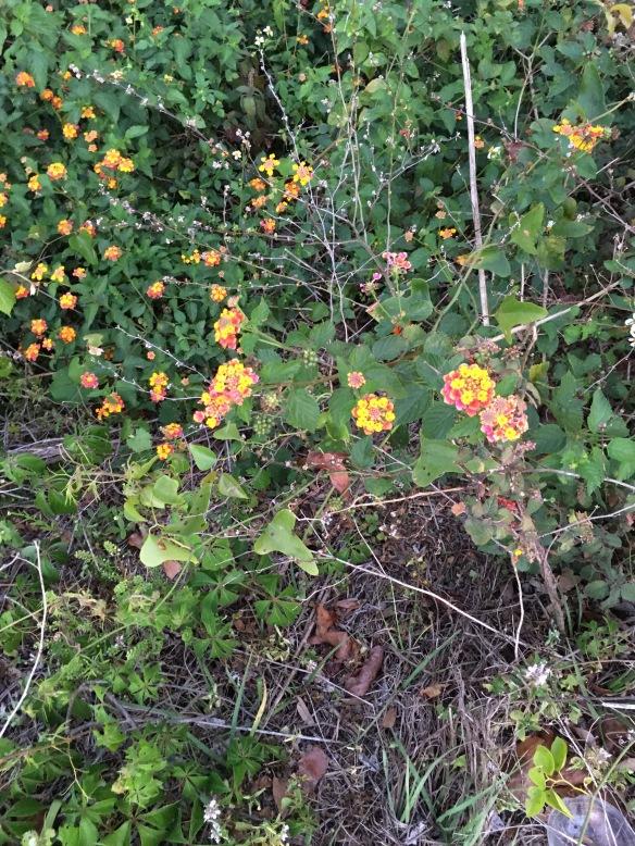FL flowers